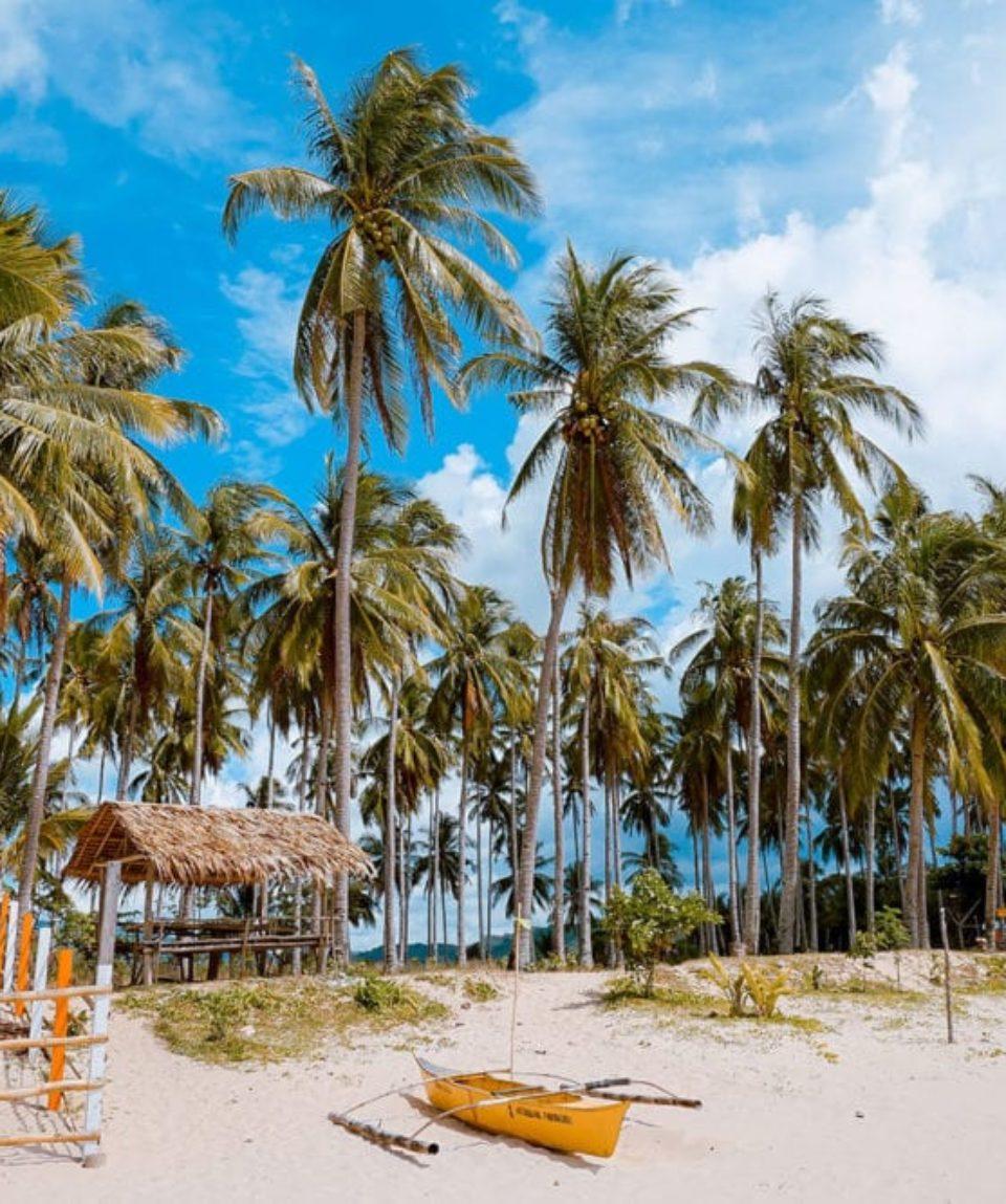 belle plage avec des palmiers
