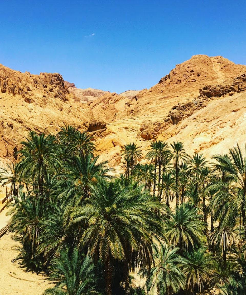 chebika-oasis-sahara