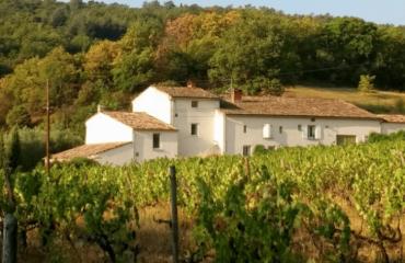 La Source dans les vignes