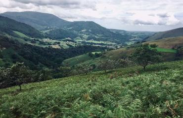 nature-retraite-yoga-ayurveda-pays-basque