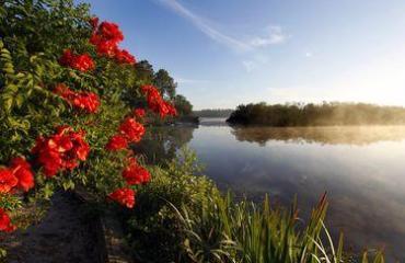 fleurs lac mimizan landes